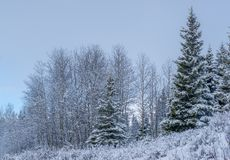 Canadian Wilderness - Snow Covered royalty free stock images