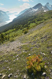 Canadian landscape with glacier. Icefields parkway. Alberta. Can Royalty Free Stock Photography