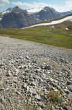 Canadian landscape with glacier. Icefields parkway. Alberta. Can Royalty Free Stock Images