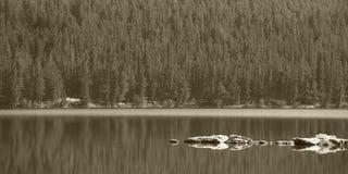Canadian landscape in Pyraimd lake. Jasper. Alberta Stock Photo