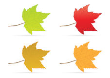 Canadian Leaf set Stock Photos