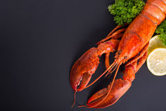 Canadian lobster food Royalty Free Stock Image