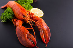 Canadian lobster food Royalty Free Stock Images