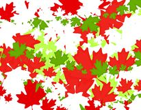 Canadian Maple Leaf Christmas Background. A background pattern featuring Canadian maple leaf flag symbols in red, green and white - casually arranged Stock Image