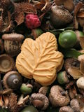 Canadian maple leaf cookie on bed of autumn nuts, fruits, and seeds. One Canadian maple cream cookie on a bed of autumn fruit, nuts and seeds, from Hempstead Stock Photos
