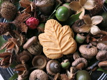 Canadian maple leaf cookie surrounded by nature, on a plate. One Canadian maple cream cookie, surrounded by a variety of fruits and seeds collected from Stock Photo