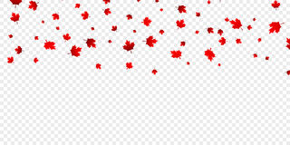 Canadian maple leaves background. Falling red leaves for Canada Day 1st July.  vector illustration