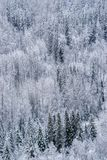 Canadian North Slope with Mixed Forest after Snow Fall royalty free stock images