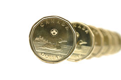 Canadian One Dollar Coin Stock Photos
