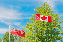 Canadian and Ontario flag, trees and sky at the background. Royalty Free Stock Image