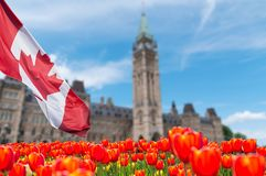 Canadian Parliament Building at Ottawa. With full bloom red and yellow tulips in front royalty free stock image