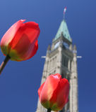 Canadian Parliament, Tulips Festival Stock Images