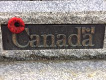 Canadian Poppy Royalty Free Stock Photo