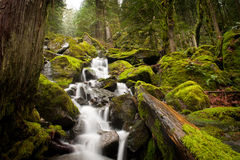 Canadian Rainforest Stock Images