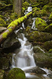 Canadian Rainforest Royalty Free Stock Photo