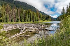 Canadian river and trees with logs royalty free stock images