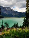 Canadian Rockies. Wildflowers and Mountains in the Canadian Rockies stock image