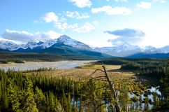 Canadian Rockies, Autumn Scenery of Icefields Parkway, Saskatchewan Crossing. Alberta, Canada royalty free stock photo