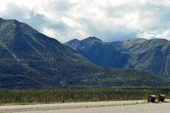 Canadian Rockies Rest Stop on Alaska Highway with Bearproof Garbage Receptacles Royalty Free Stock Images
