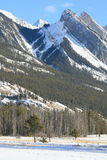 Canadian Rocky Mountains. Jasper national park, alberta, canada, dead frozen forest below the mountains Royalty Free Stock Image