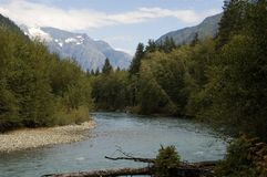 Canadian salmon river Royalty Free Stock Image