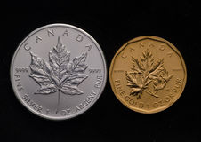 Canadian Silver Maple vs. Canada Gold Maple Leaf Royalty Free Stock Images
