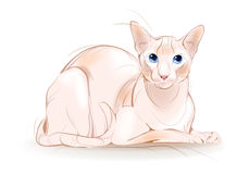 Canadian sphinx cat Royalty Free Stock Image
