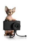 The Canadian sphynx with camera Royalty Free Stock Photos
