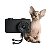 The Canadian sphynx with camera Royalty Free Stock Photography