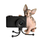 The Canadian sphynx with camera Stock Images