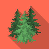 Canadian spruce. Canada single icon in flat style vector symbol stock illustration web. Canadian spruce. Canada single icon in flat style vector symbol stock Royalty Free Stock Photography