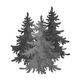 Canadian spruce. Canada single icon in monochrome style vector symbol stock illustration web. Stock Photo