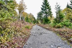 Canadian trail during fall in Mount Ernest Laforce, Gaspésie national park royalty free stock photos
