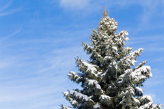 Canadian Tree in the Winter Royalty Free Stock Photography