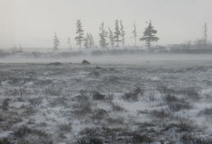 Canadian tundra. Churchill National Park, Canada. Arctic landscape. An excellent illustration Stock Images