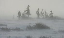 Canadian tundra. Churchill National Park, Canada. Arctic landscape. Royalty Free Stock Photography