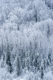 Canadian Valley with Mixed Forest after Snow Fall royalty free stock photo