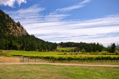 Canadian west coast vineyard Stock Photos