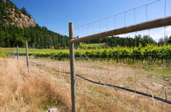 Canadian west coast vineyard. A vineyard on Saturna Island, the west coast of Canada Royalty Free Stock Photos