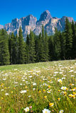 Canadian wilderness. Scenic nature landscape with Castle Mountain in the background in Banff National Park, Alberta, Canada royalty free stock photos