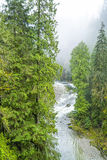 The Canadian wilderness - beautiful green trees in the woods Royalty Free Stock Photo
