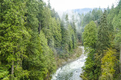 The Canadian wilderness - beautiful green trees in the woods Royalty Free Stock Photography