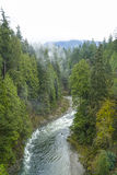The Canadian wilderness - beautiful green trees in the woods Stock Image