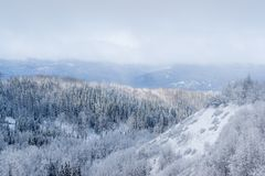Canadian Wilderness with Mixed Forest - Snow Covered. A canadian landscape clad with a mixed forest after a heavy snow fall stock image