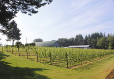 Canadian Wine Producing Cottage Industry Royalty Free Stock Photos