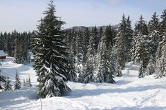 Canadian Winter Big firs path Snow Admire Landscapes. Canadian Winter is amazing Royalty Free Stock Photography