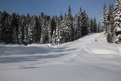 Canadian winter big firs path snow admire landscapes. Canadian Winter is amazing Stock Photo