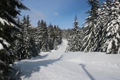 Canadian Winter Big firs path Snow Admire Landscapes. Canadian Winter is not a joke ! an open landscape with beautiful big snowy firs trees, snow in quantity royalty free stock photo