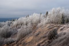 Canadian Winter Mood - Hoar Frost stock photos