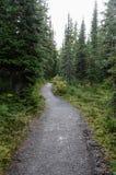 Canadiense Forest Footpath imágenes de archivo libres de regalías